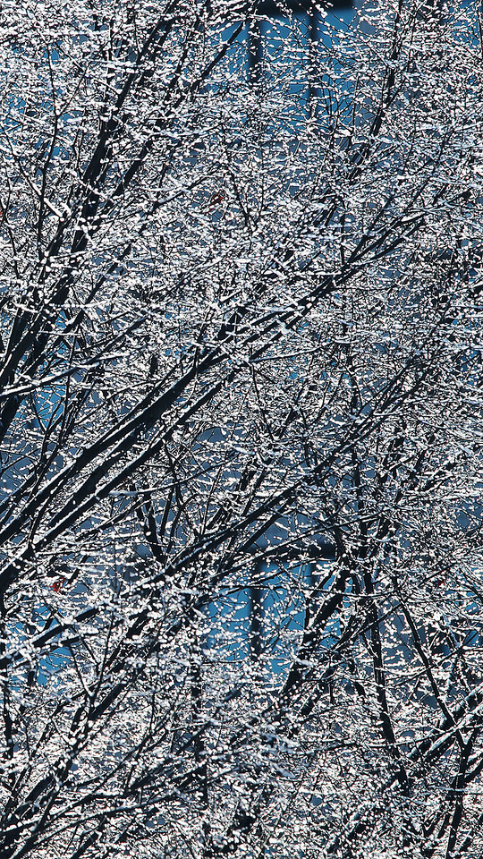 Glittering snow on branches in Deoksusung