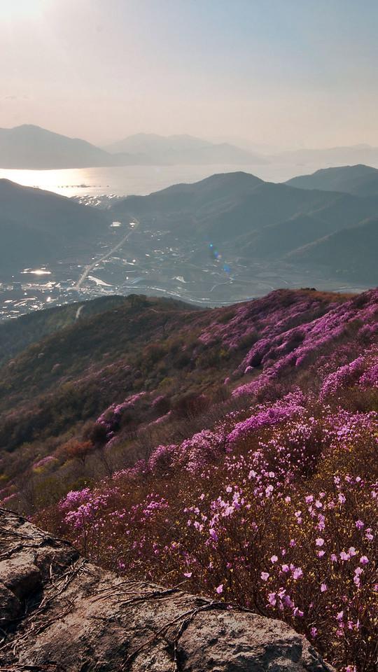 Yeongchuisan covered with azalea, Yeosu, Korea